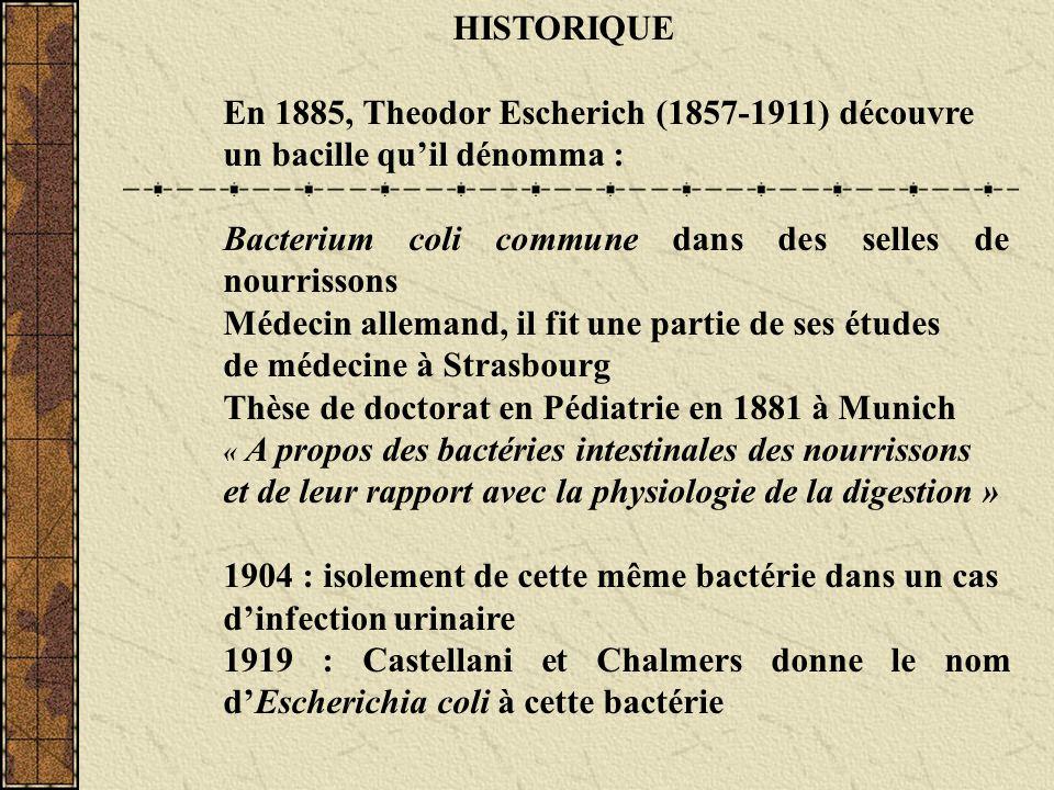 HISTORIQUE En 1885, Theodor Escherich (1857-1911) découvre un bacille quil dénomma : Bacterium coli commune dans des selles de nourrissons Médecin all