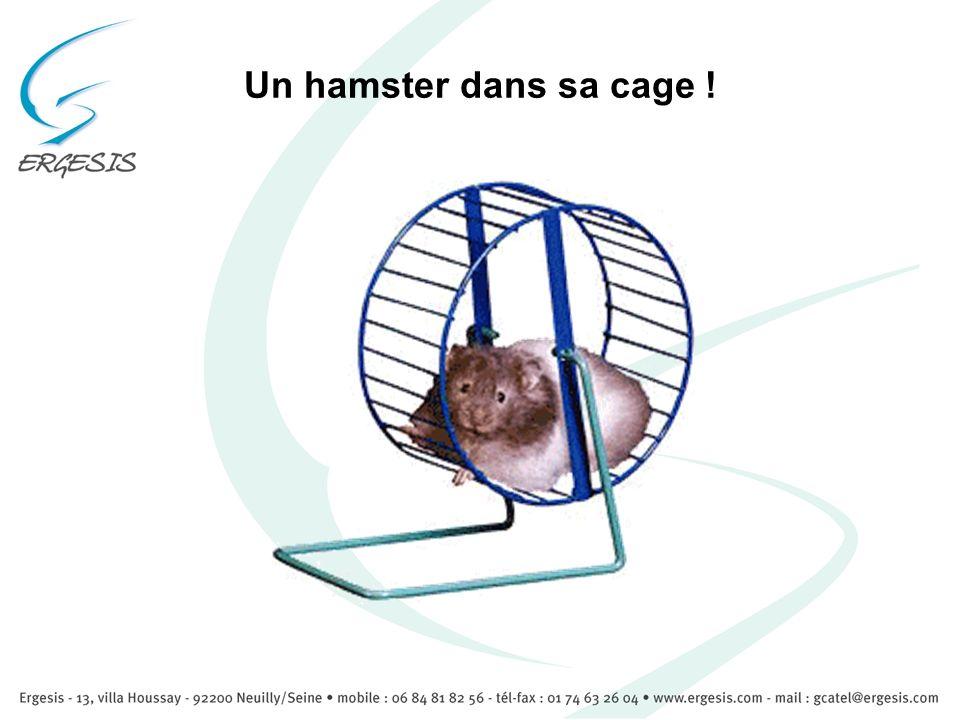 Un hamster dans sa cage !