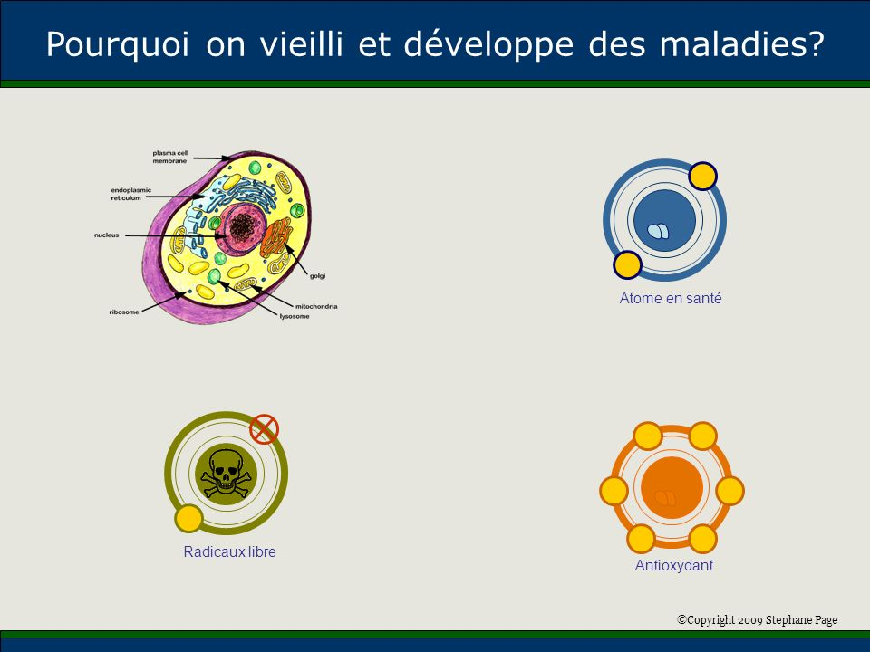 ©Copyright 2009 Stephane Page Atome en santé Antioxydant Radicaux libre Pourquoi on vieilli et développe des maladies?