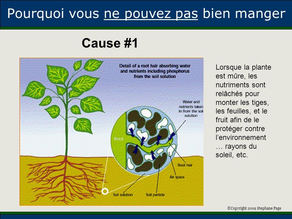 ©Copyright 2009 Stephane Page Pourquoi vous ne pouvez pas bien manger Lorsque la plante est mûre, les nutriments sont relâchés pour monter les tiges,