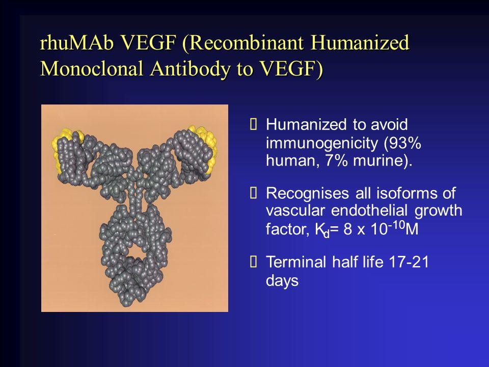 rhuMAb VEGF (Recombinant Humanized Monoclonal Antibody to VEGF) vascular endothelial growth Humanized to avoid immunogenicity (93% human, 7% murine).