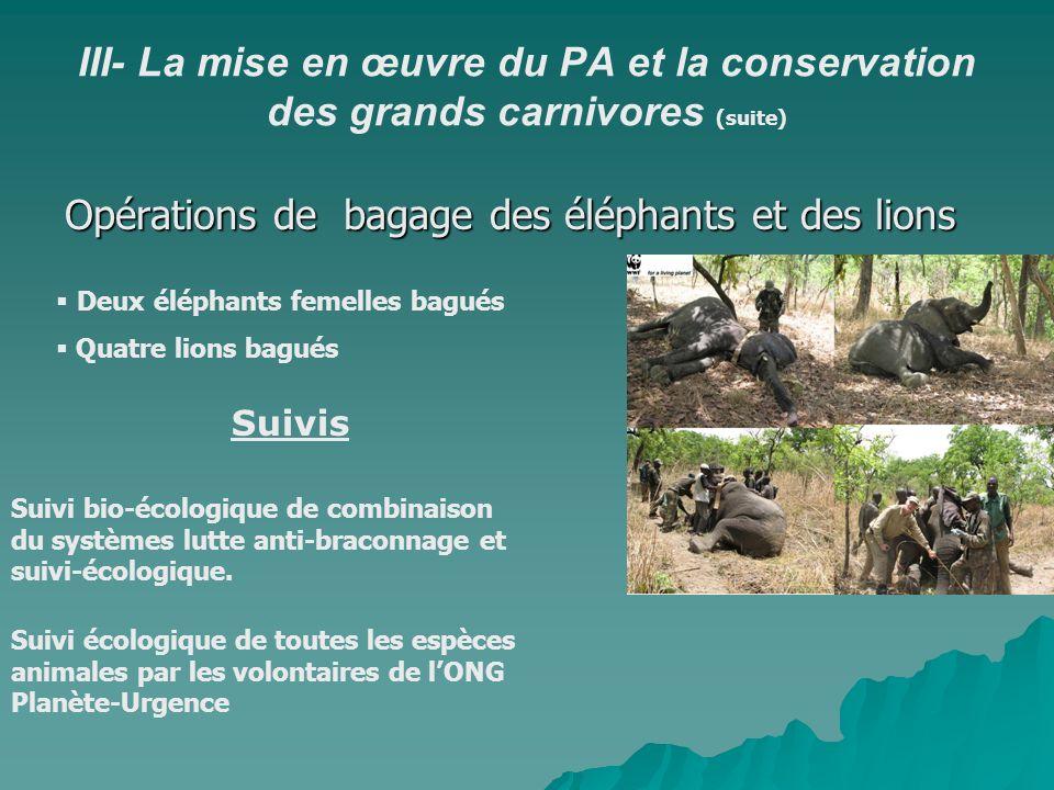 III- La mise en œuvre du PA et la conservation des grands carnivores (suite) Opérations de bagage des éléphants et des lions Deux éléphants femelles b