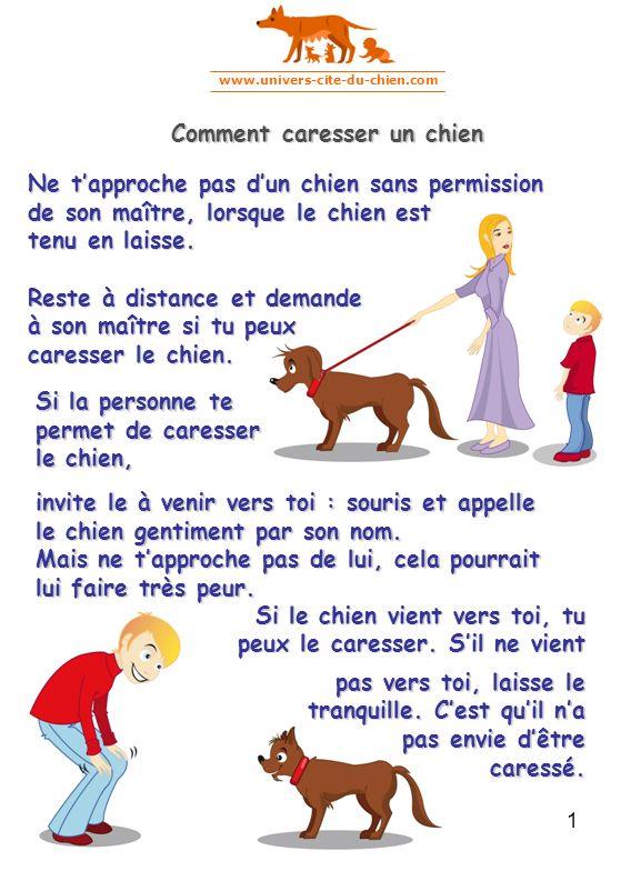www.univers-cite-du-chien.com 1 Comment caresser un chien Si la personne te permet de caresser le chien, Ne tapproche pas dun chien sans permission de