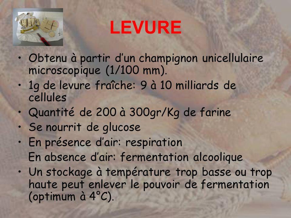LEVURE Obtenu à partir dun champignon unicellulaire microscopique (1/100 mm). 1g de levure fraîche: 9 à 10 milliards de cellules Quantité de 200 à 300