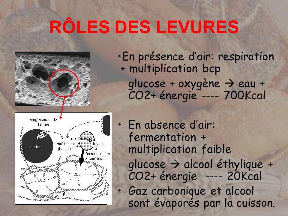 RÔLES DES LEVURES En présence dair: respiration + multiplication bcp glucose + oxygène eau + CO2+ énergie ---- 700Kcal En absence dair: fermentation +