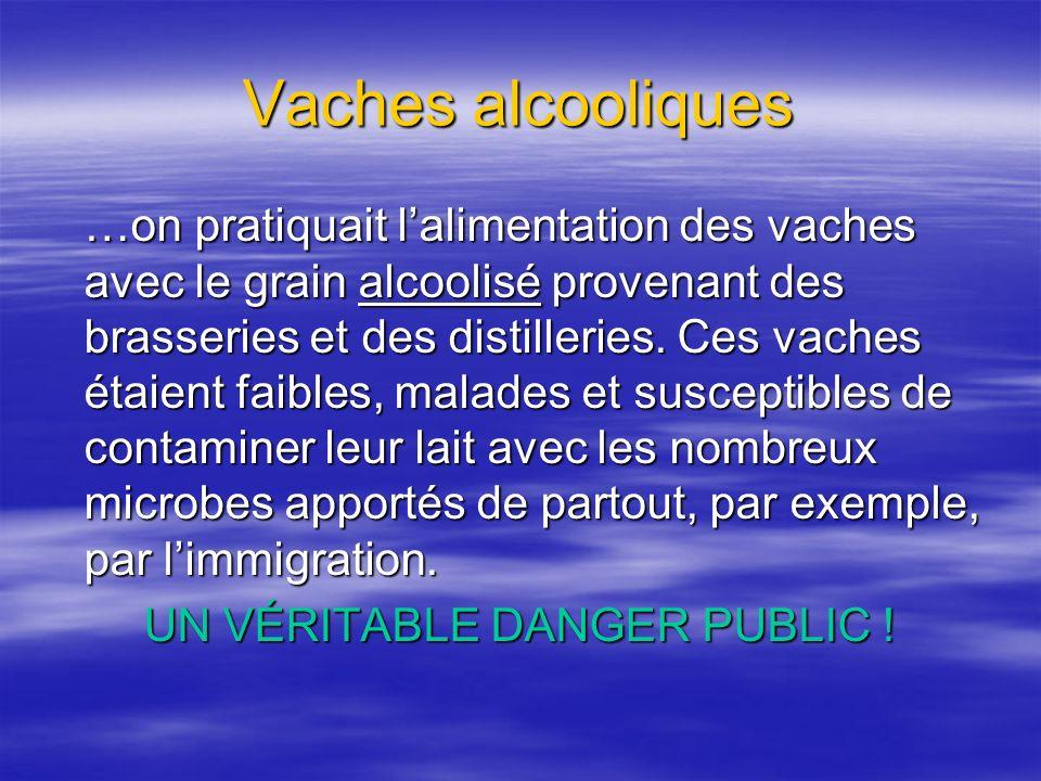 Vaches alcooliques …on pratiquait lalimentation des vaches avec le grain alcoolisé provenant des brasseries et des distilleries. Ces vaches étaient fa