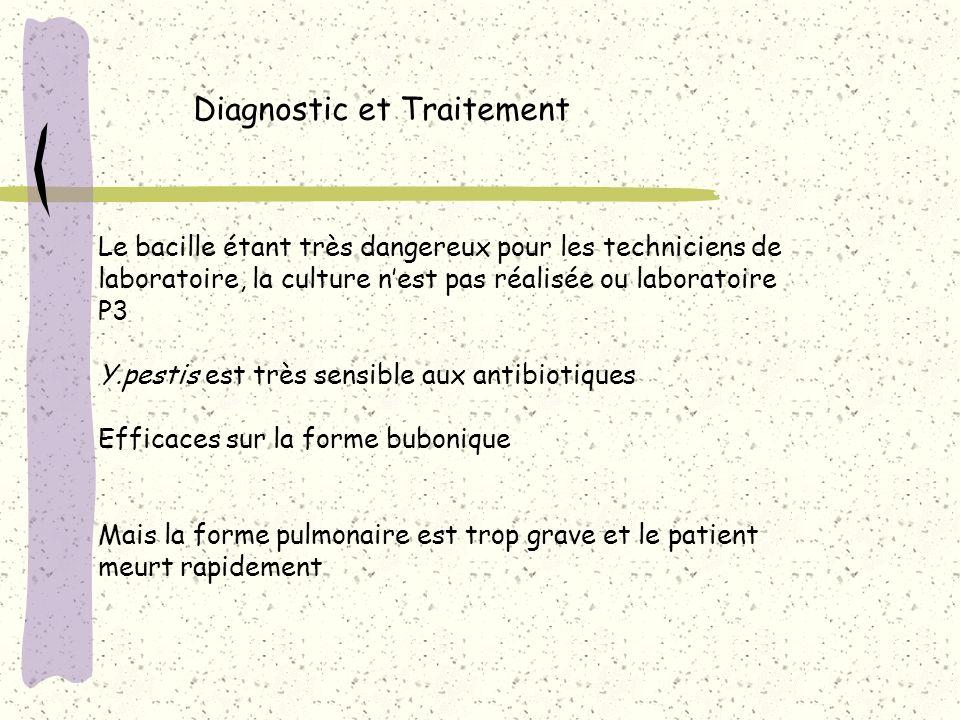 Diagnostic et Traitement Le bacille étant très dangereux pour les techniciens de laboratoire, la culture nest pas réalisée ou laboratoire P3 Y.pestis