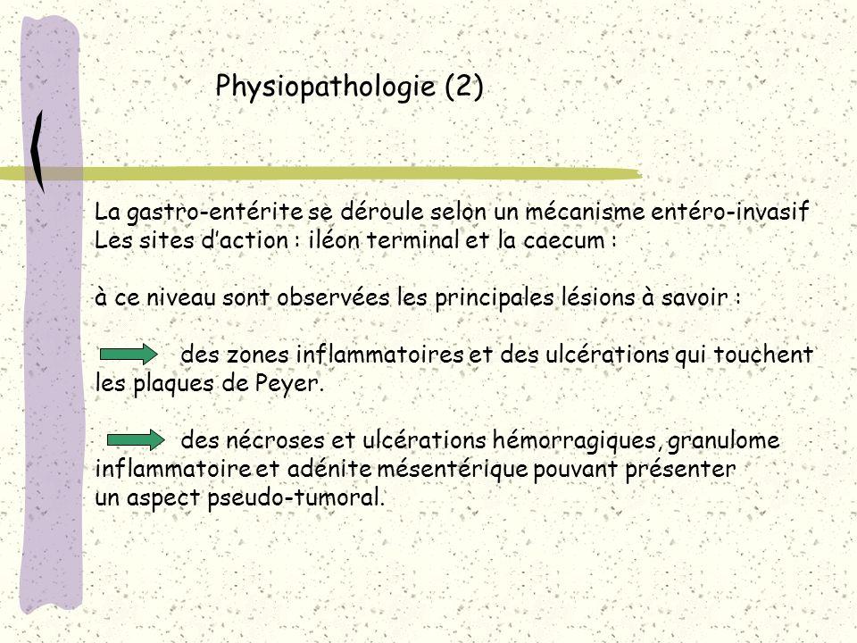 Physiopathologie (2) La gastro-entérite se déroule selon un mécanisme entéro-invasif Les sites daction : iléon terminal et la caecum : à ce niveau son