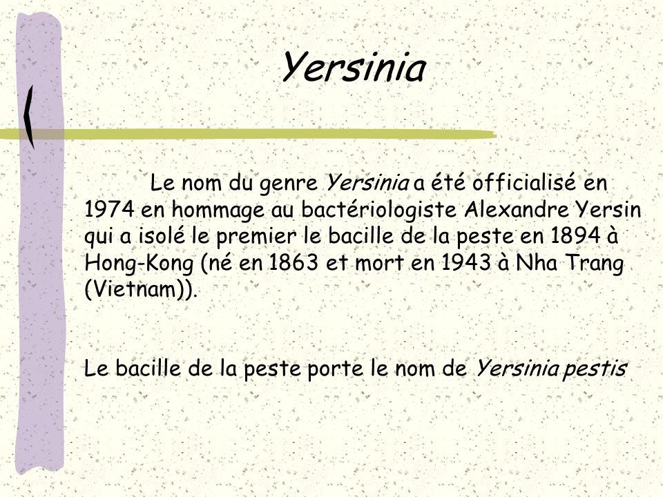 Yersinia Le nom du genre Yersinia a été officialisé en 1974 en hommage au bactériologiste Alexandre Yersin qui a isolé le premier le bacille de la pes
