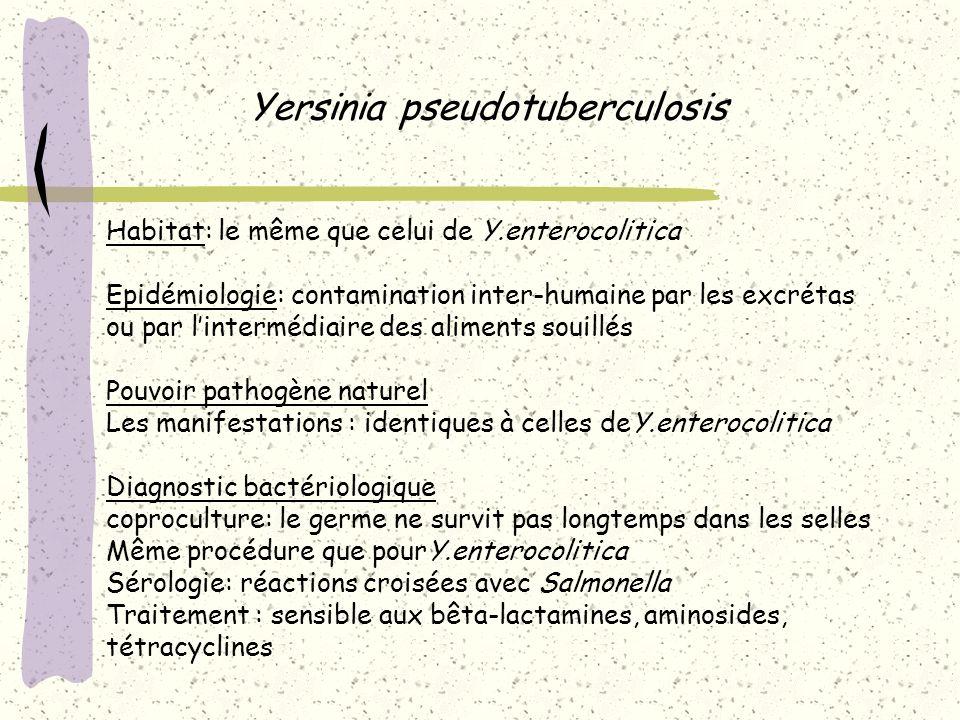 Yersinia pseudotuberculosis Habitat: le même que celui de Y.enterocolitica Epidémiologie: contamination inter-humaine par les excrétas ou par lintermé