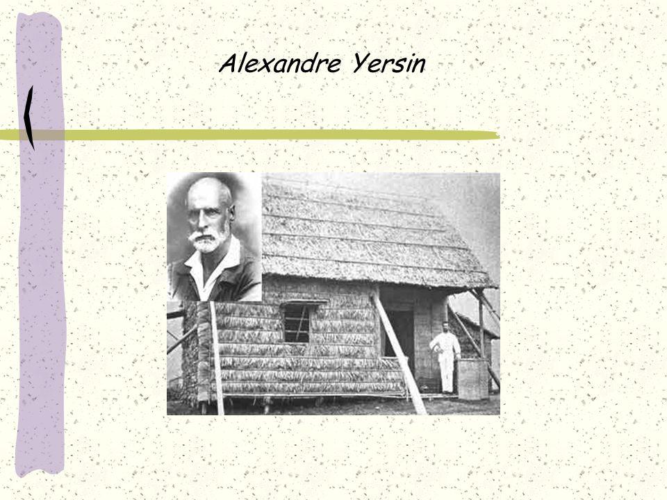 Yersinia En 1883, Mallassez et Vignal isolent un bacille responsable de lésions pseudo-tuberculeuses du foie et de la rate chez un cobaye.