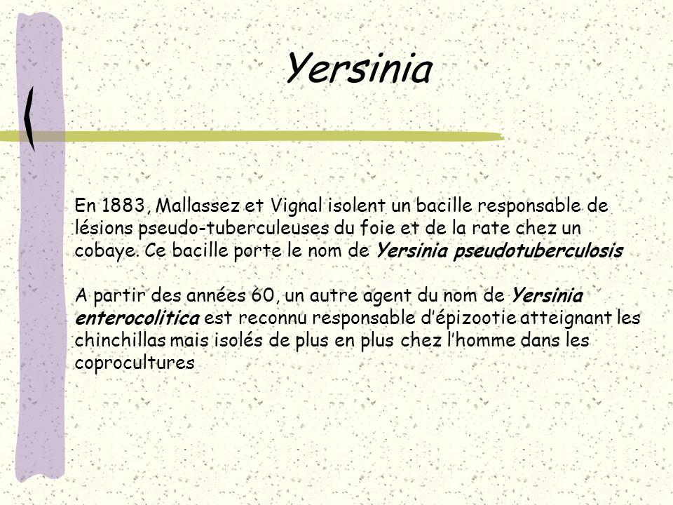 Yersinia En 1883, Mallassez et Vignal isolent un bacille responsable de lésions pseudo-tuberculeuses du foie et de la rate chez un cobaye. Ce bacille