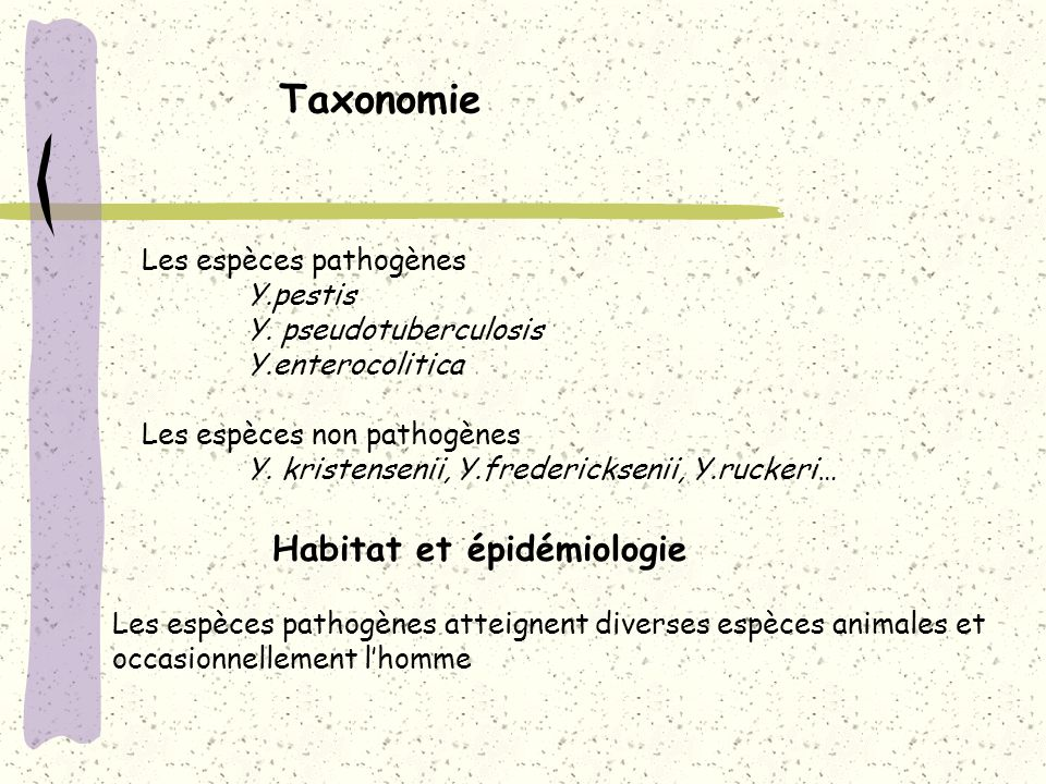 Taxonomie Les espèces pathogènes Y.pestis Y. pseudotuberculosis Y.enterocolitica Les espèces non pathogènes Y. kristensenii, Y.fredericksenii, Y.rucke