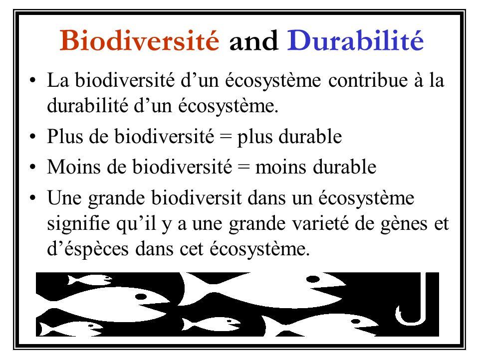 Biodiversité and Durabilité La biodiversité dun écosystème contribue à la durabilité dun écosystème. Plus de biodiversité = plus durable Moins de biod