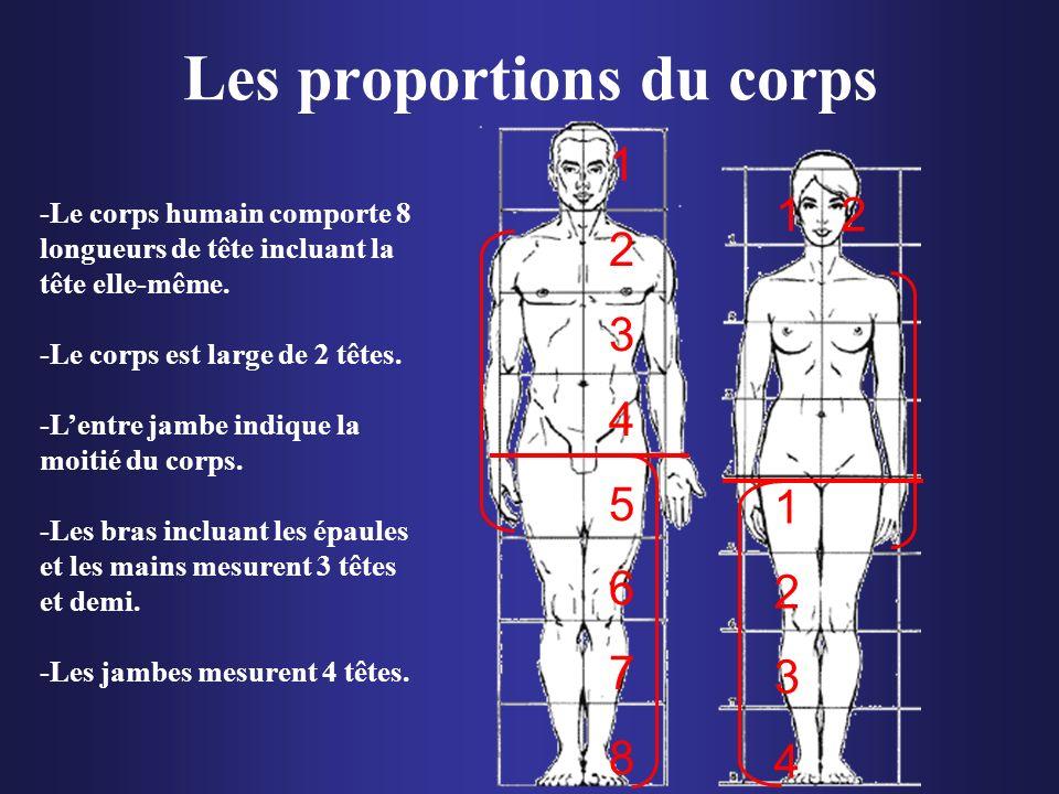 Les proportions du corps -Le corps humain comporte 8 longueurs de tête incluant la tête elle-même. -Le corps est large de 2 têtes. -Lentre jambe indiq