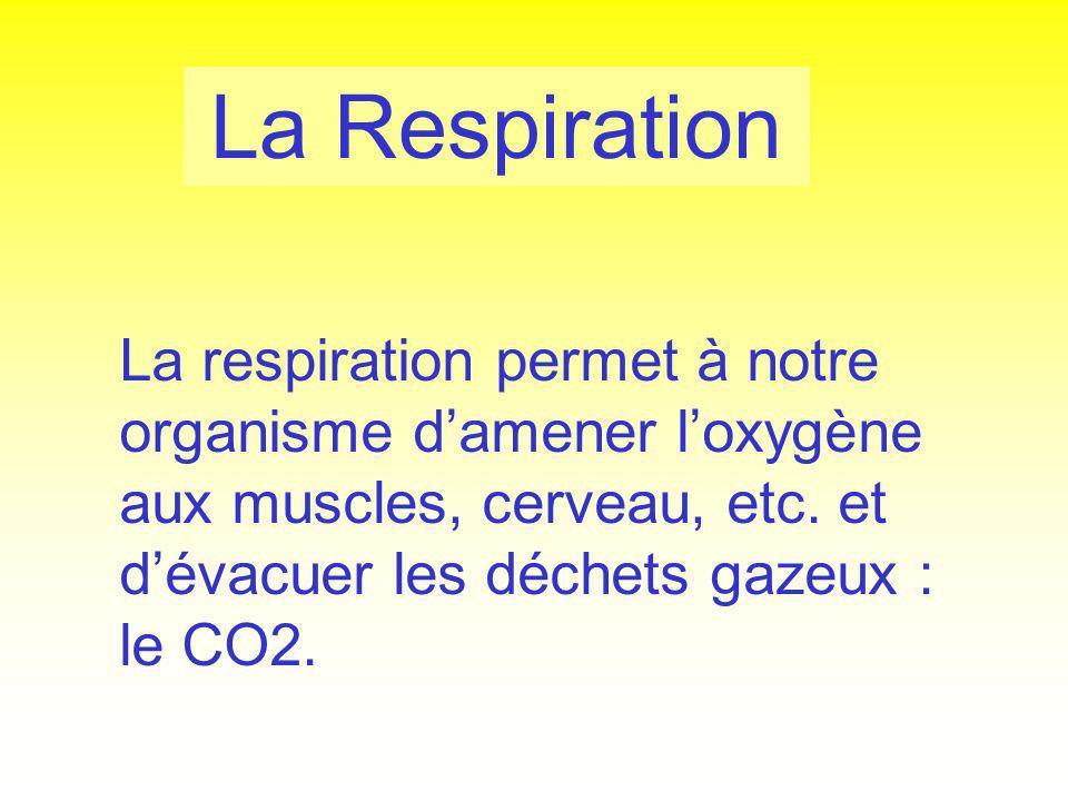 La Respiration La respiration permet à notre organisme damener loxygène aux muscles, cerveau, etc. et dévacuer les déchets gazeux : le CO2.
