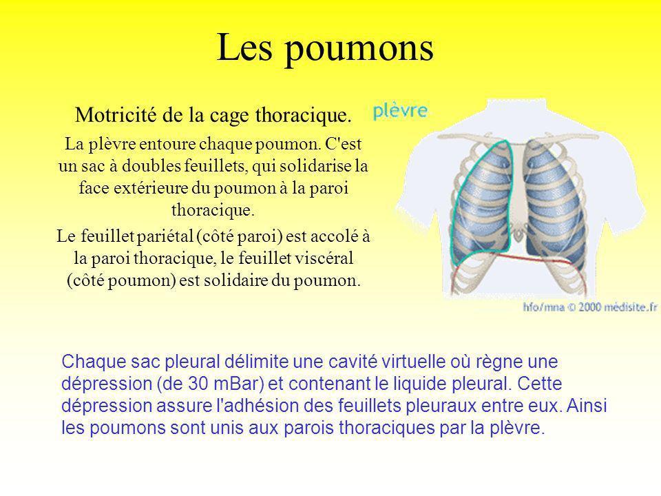 Motricité de la cage thoracique. La plèvre entoure chaque poumon. C'est un sac à doubles feuillets, qui solidarise la face extérieure du poumon à la p