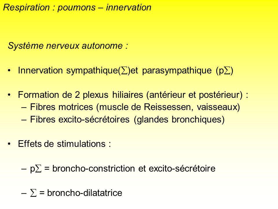 Système nerveux autonome : Innervation sympathique( )et parasympathique (p ) Formation de 2 plexus hiliaires (antérieur et postérieur) : –Fibres motri