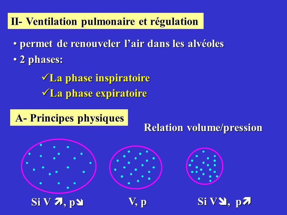 La phase inspiratoire La phase inspiratoire II- Ventilation pulmonaire et régulation permet de renouveler lair dans les alvéoles permet de renouveler