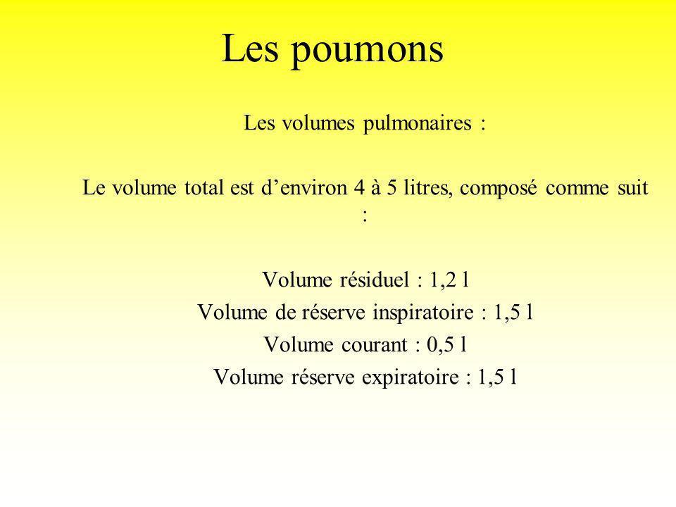 Les poumons Les volumes pulmonaires : Le volume total est denviron 4 à 5 litres, composé comme suit : Volume résiduel : 1,2 l Volume de réserve inspir