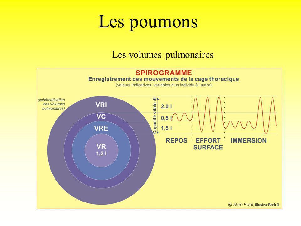 Les poumons Les volumes pulmonaires