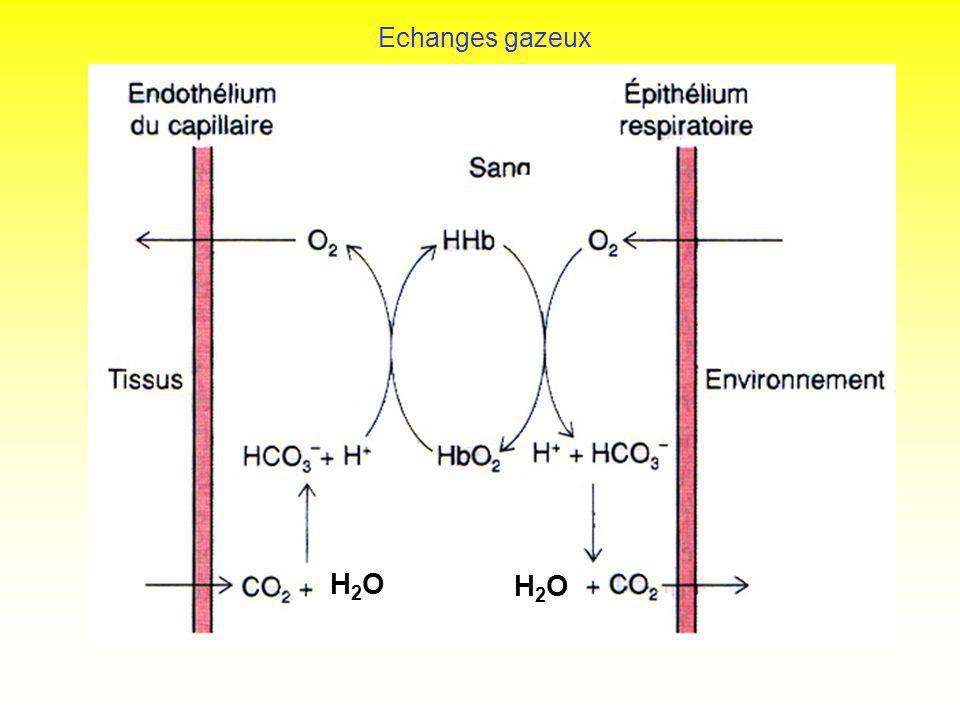 Echanges gazeux H2OH2O H2OH2O