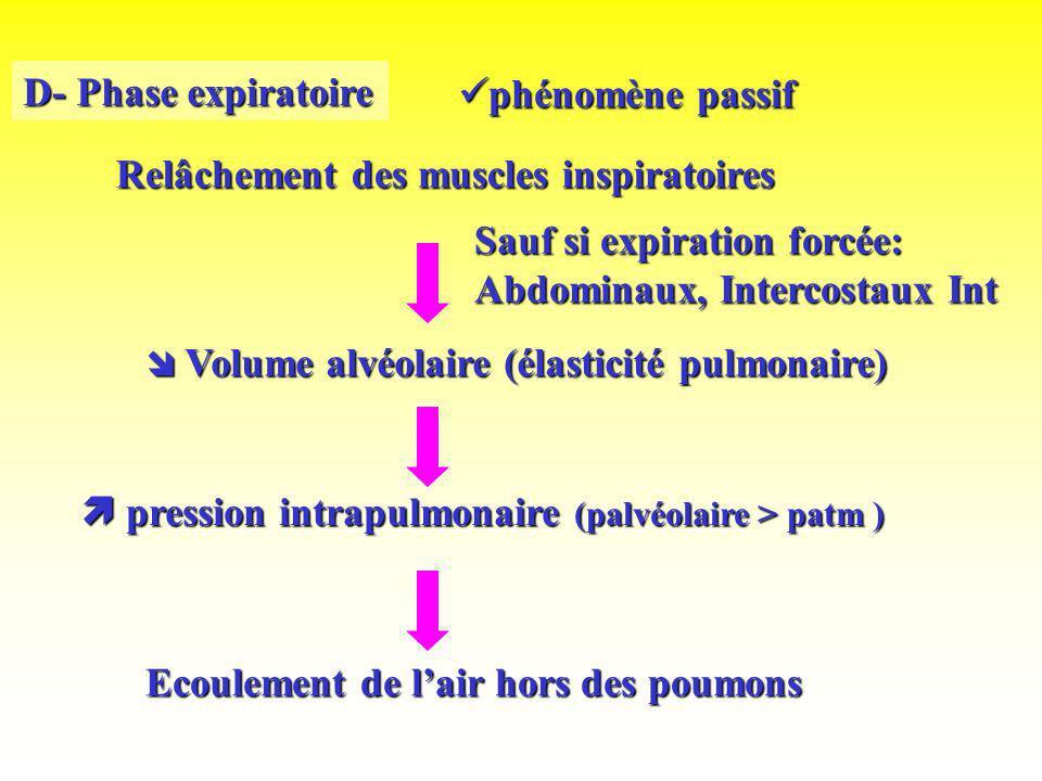 D- Phase expiratoire Relâchement des muscles inspiratoires Volume alvéolaire (élasticité pulmonaire) Volume alvéolaire (élasticité pulmonaire) pressio