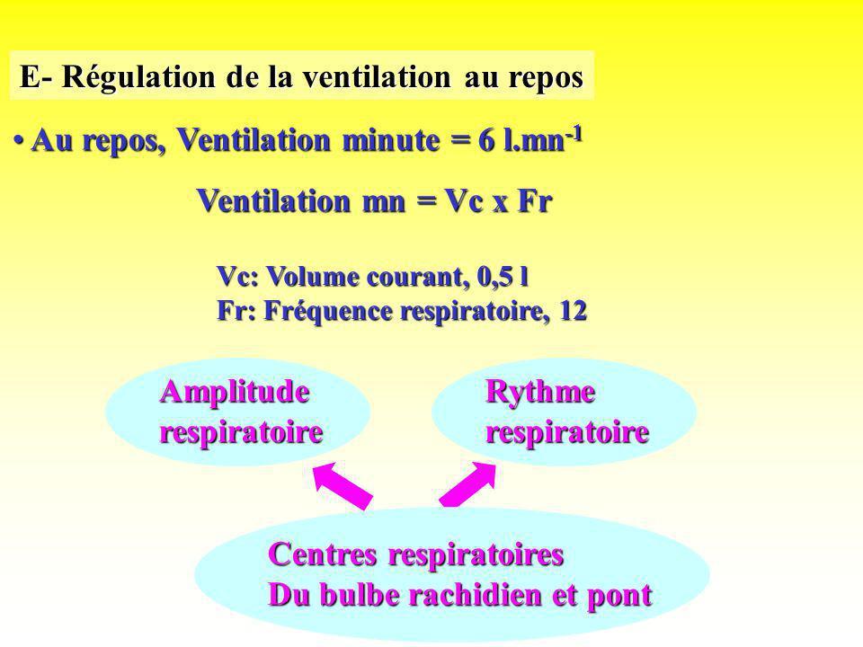 E- Régulation de la ventilation au repos Au repos, Ventilation minute = 6 l.mn -1 Au repos, Ventilation minute = 6 l.mn -1 Ventilation mn = Vc x Fr Vc