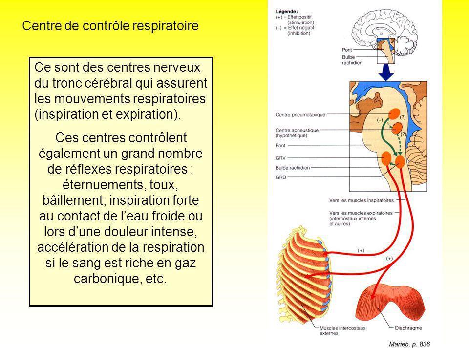 Centre de contrôle respiratoire Ce sont des centres nerveux du tronc cérébral qui assurent les mouvements respiratoires (inspiration et expiration). C