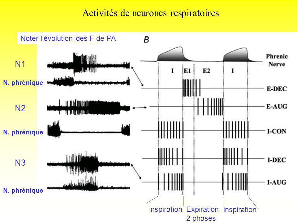Activités de neurones respiratoires N. phrénique N1 N2 N3 inspirationExpiration 2 phases inspiration Noter lévolution des F de PA