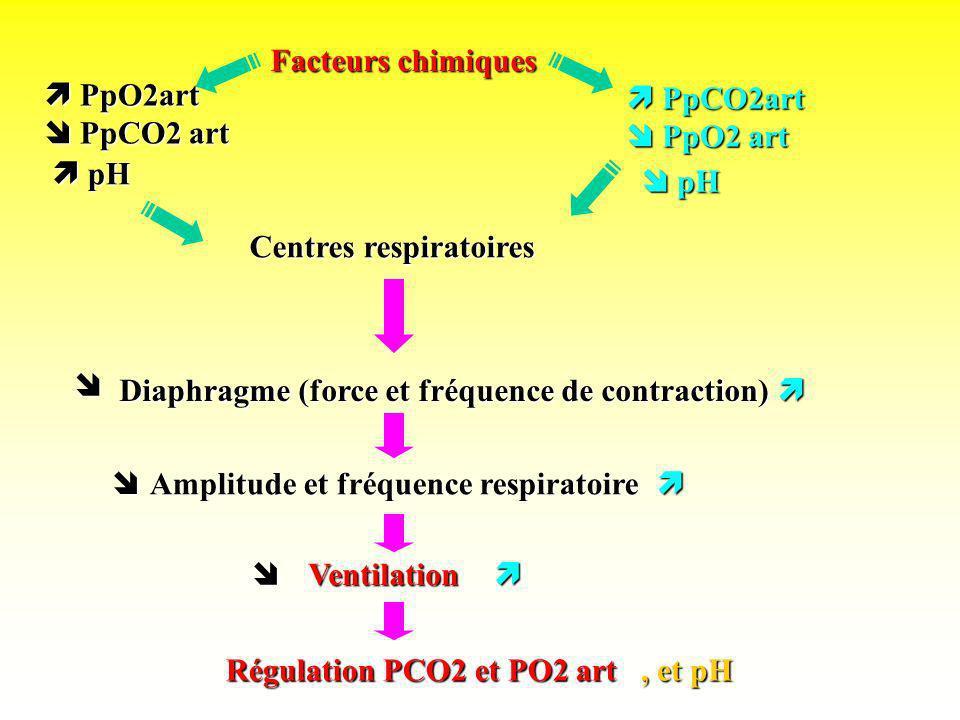 PpCO2art PpCO2art PpO2 art PpO2 art PpCO2 art PpCO2 art Facteurs chimiques Centres respiratoires Diaphragme (force et fréquence de contraction) Amplit