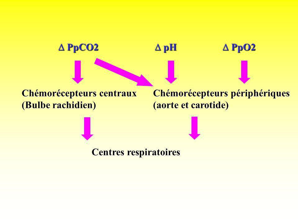 Chémorécepteurs centraux (Bulbe rachidien) Chémorécepteurs périphériques (aorte et carotide) Centres respiratoires pH pH PpCO2 PpCO2 PpO2 PpO2