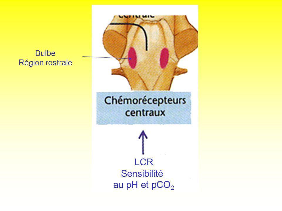 LCR Sensibilité au pH et pCO 2 Bulbe Région rostrale