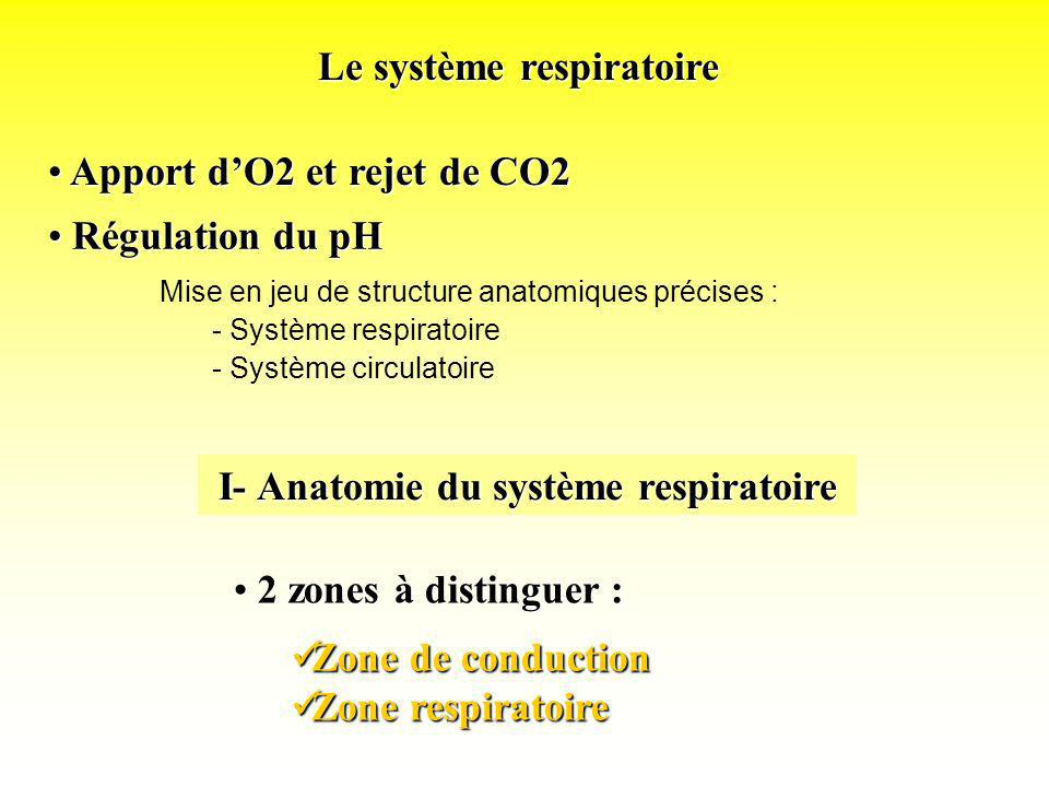 Apport dO2 et rejet de CO2 Apport dO2 et rejet de CO2 Zone de conduction Zone de conduction Zone respiratoire Zone respiratoire Le système respiratoir