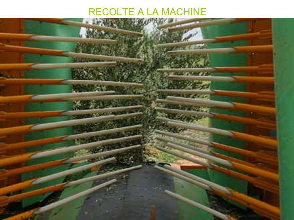 RECOLTE A LA MACHINE