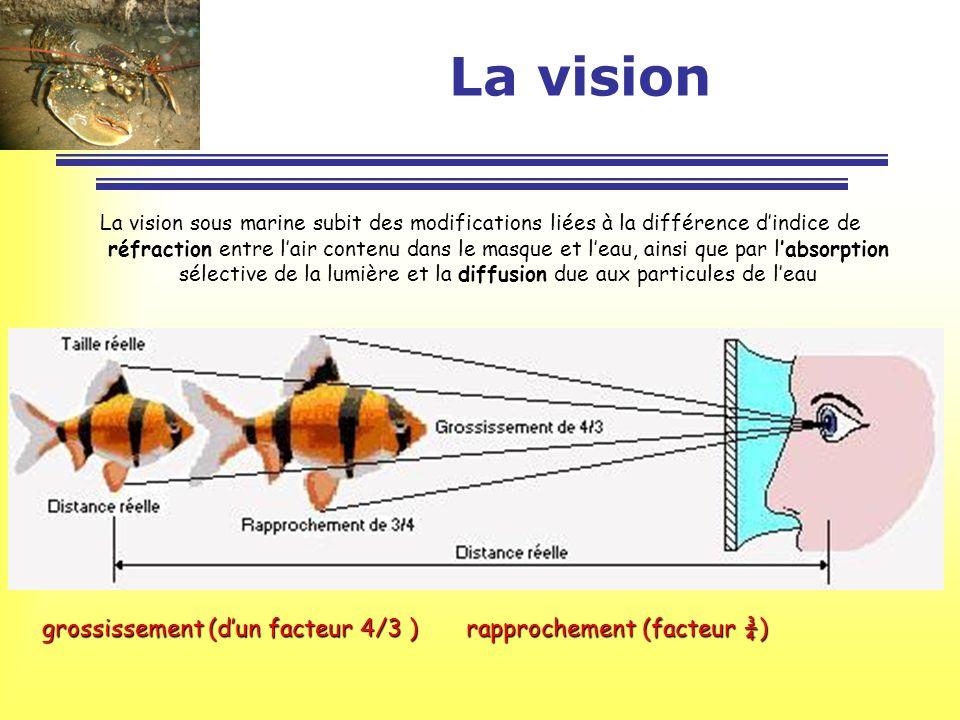La vision La vision sous marine subit des modifications liées à la différence dindice de réfraction entre lair contenu dans le masque et leau, ainsi q