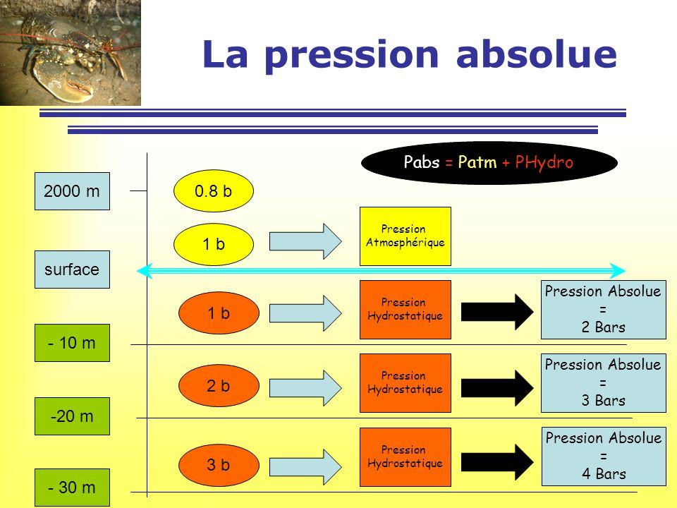 surface - 10 m -20 m - 30 m 2000 m 0.8 b 1 b Pression Atmosphérique 1 b 2 b 3 b Pression Hydrostatique Pression Hydrostatique Pression Hydrostatique P