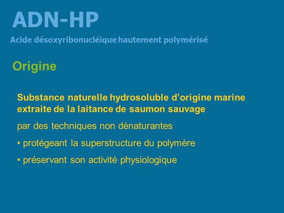 Aspect Fibres blanc-crèmes mesurant plusieurs centimètres Acide désoxyribonucléique hautement polymérisé ADN-HP