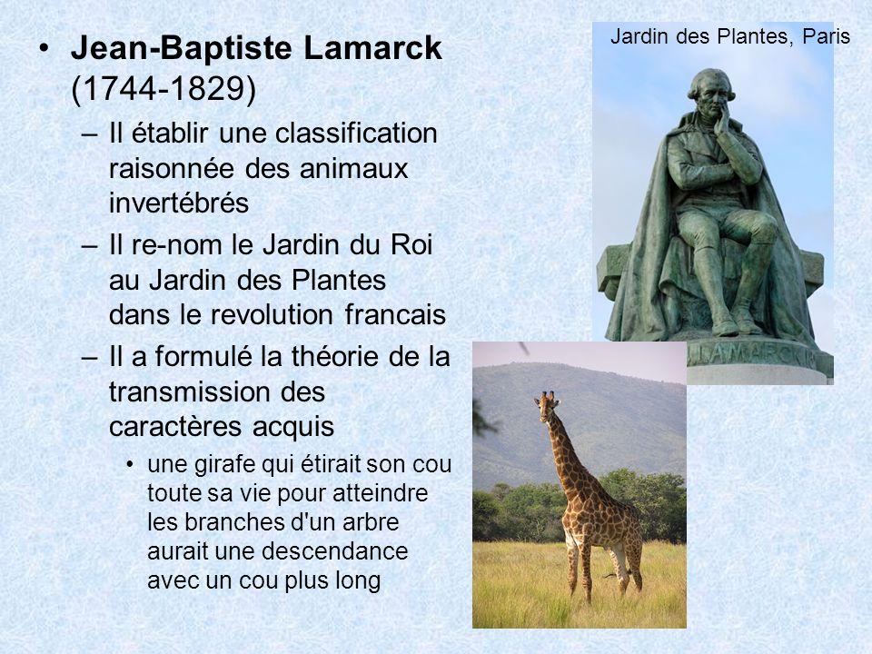 Jean-Baptiste Lamarck (1744-1829) –Il établir une classification raisonnée des animaux invertébrés –Il re-nom le Jardin du Roi au Jardin des Plantes d