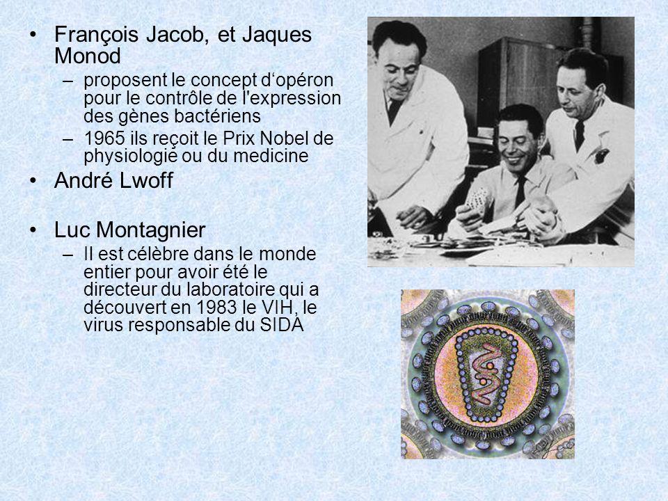 François Jacob, et Jaques Monod –proposent le concept dopéron pour le contrôle de l'expression des gènes bactériens –1965 ils reçoit le Prix Nobel de