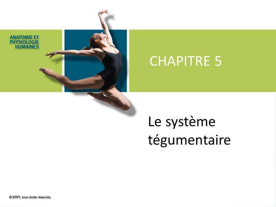 © ERPI, tous droits réservés. CHAPITRE 5 Le système tégumentaire
