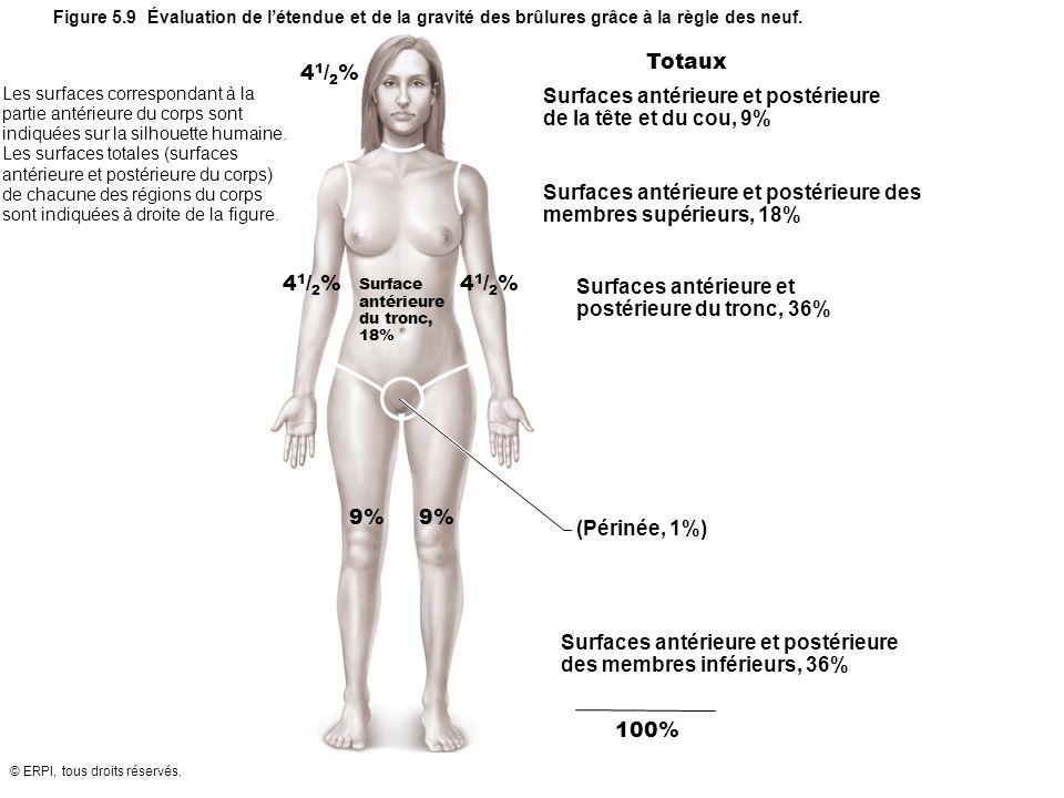 © ERPI, tous droits réservés. Totaux Surfaces antérieure et postérieure de la tête et du cou, 9% Surfaces antérieure et postérieure des membres supéri