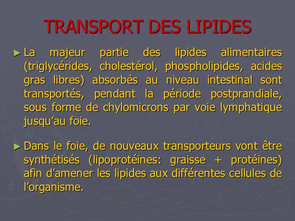 TRANSPORT DES LIPIDES La majeur partie des lipides alimentaires (triglycérides, cholestérol, phospholipides, acides gras libres) absorbés au niveau in