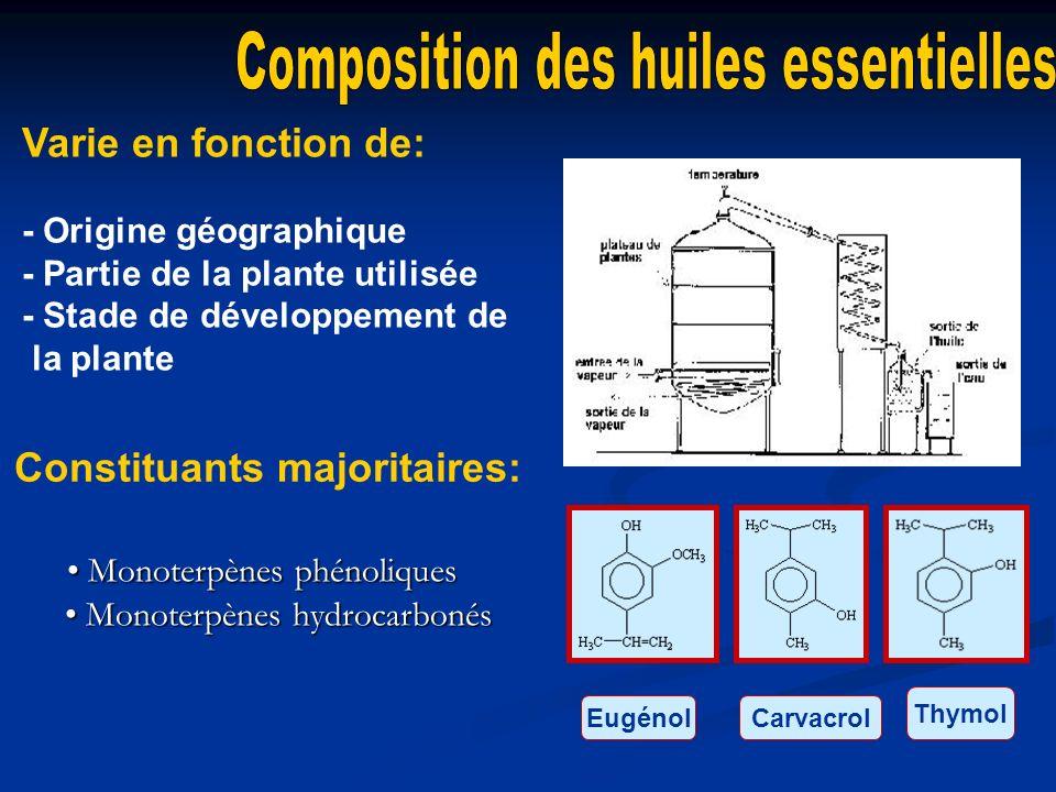 Monoterpènes phénoliques Monoterpènes hydrocarbonés Monoterpènes phénoliques Monoterpènes hydrocarbonés Thymol CarvacrolEugénol Constituants majoritai