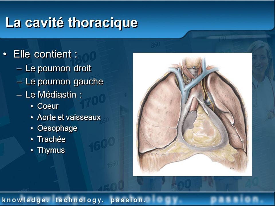 La cavité thoracique Elle contient : –Le poumon droit –Le poumon gauche –Le Médiastin : Coeur Aorte et vaisseaux Oesophage Trachée Thymus Elle contien