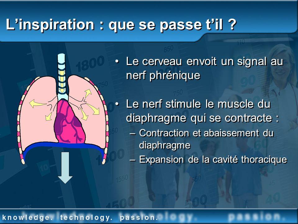 Linspiration : que se passe til ? Le cerveau envoit un signal au nerf phrénique Le nerf stimule le muscle du diaphragme qui se contracte : –Contractio