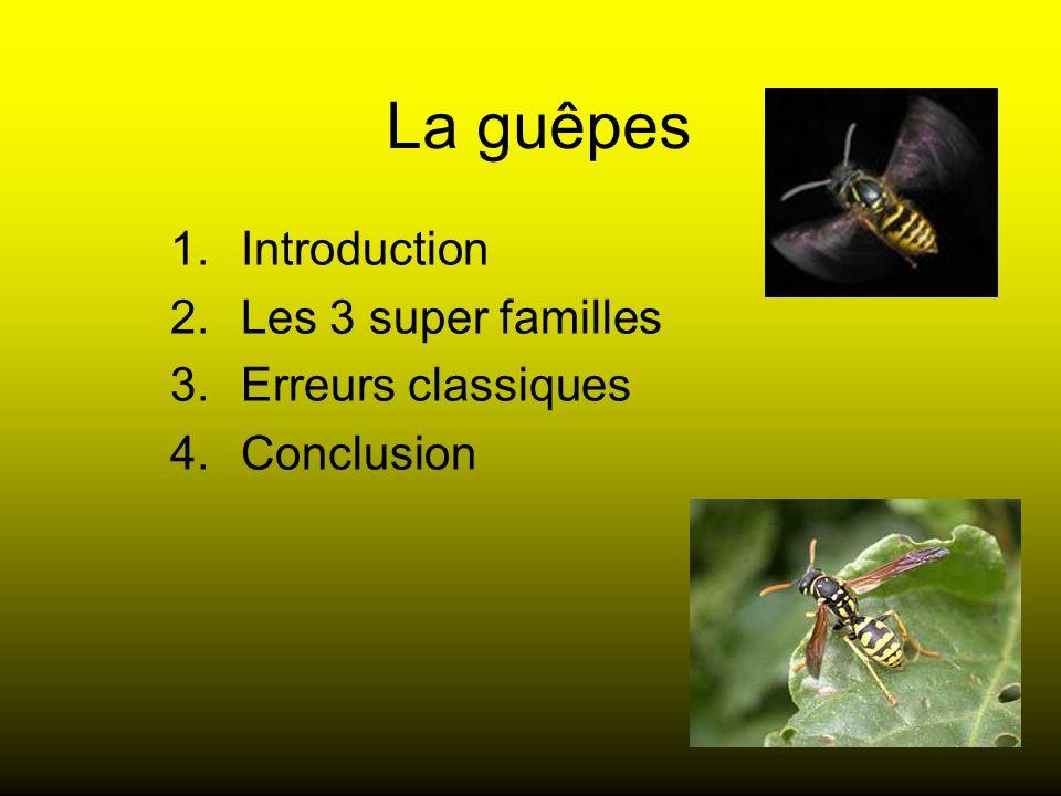 La guêpes 1.Introduction 2.Les 3 super familles 3.Erreurs classiques 4.Conclusion