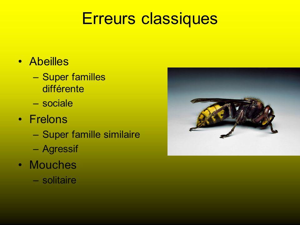 Erreurs classiques Abeilles –Super familles différente –sociale Frelons –Super famille similaire –Agressif Mouches –solitaire