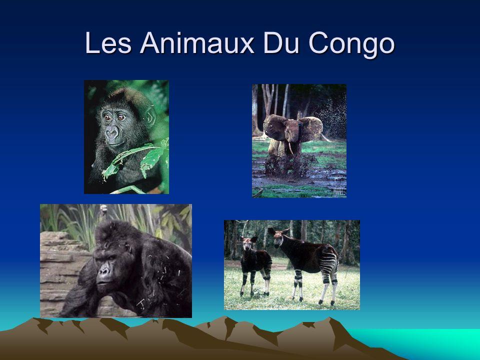 L environnement Seulement 3% du Congo est cultivée 7% est pour des pâtures Trois de quatre quartiers sont forets.