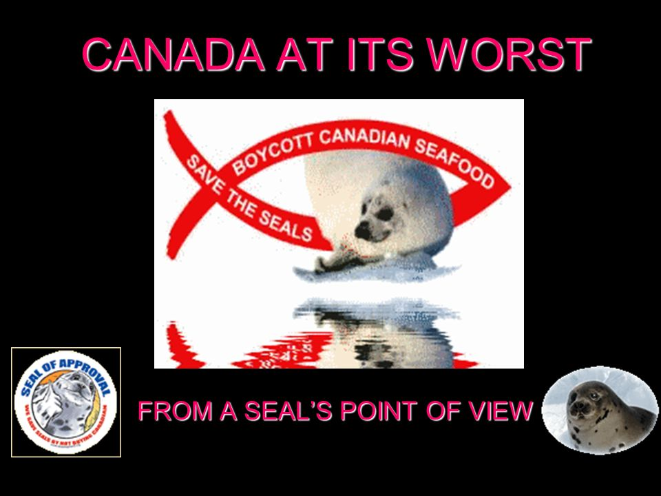 CANADA AT ITS WORST FROM A SEALS POINT OF VIEW